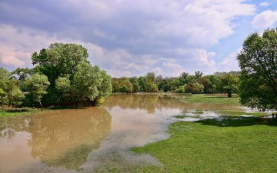 28th March 2019: Shrewsbury Water Forum presents Groundwater Flooding