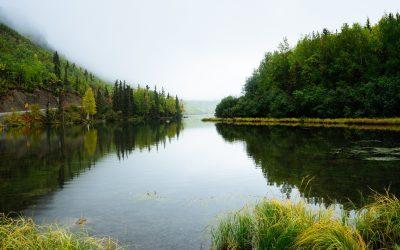 9th July 2020: Shrewsbury Water Forum presents Aquatic Ecology
